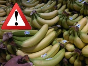 supermarket_bananas_76065500